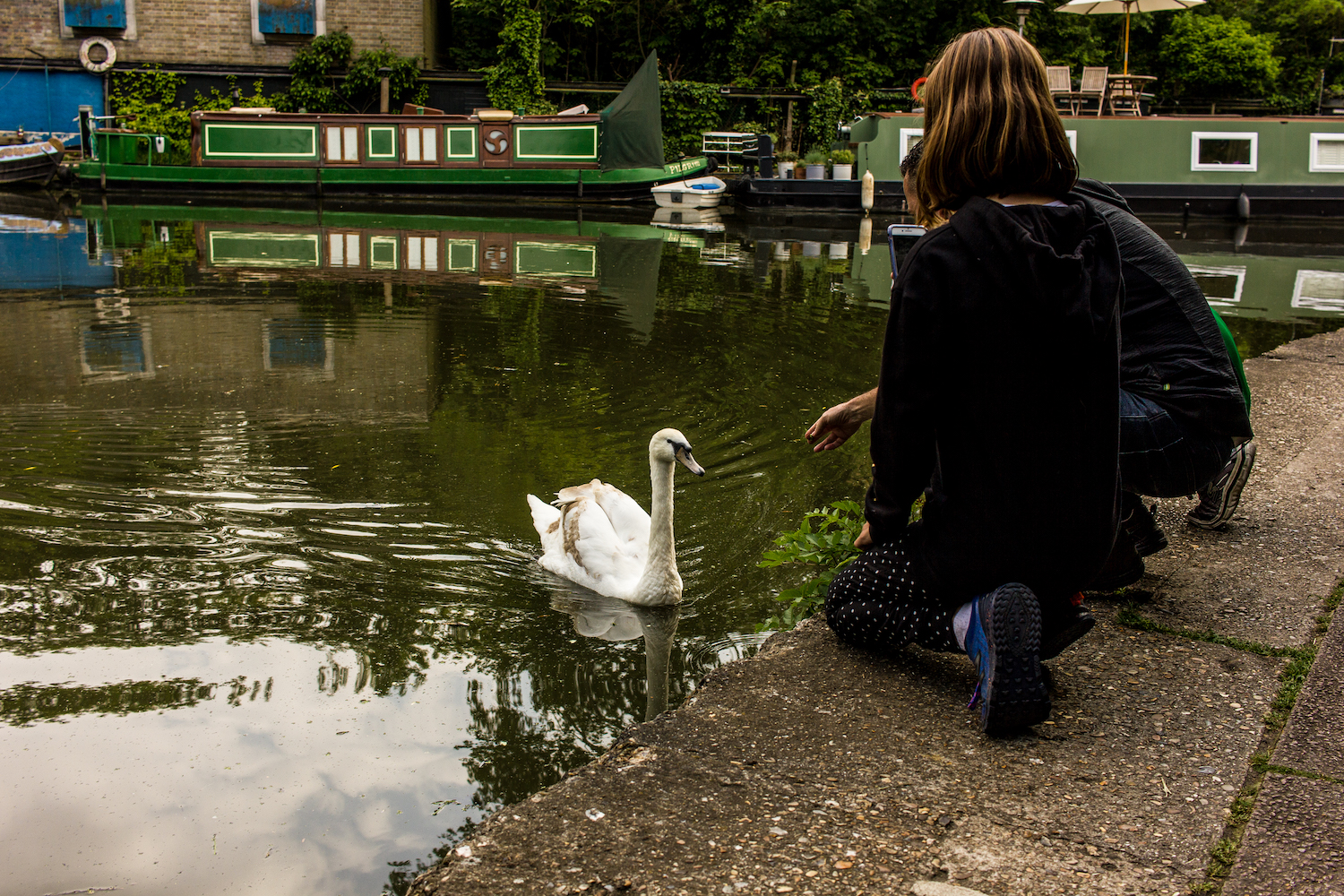 Professional Photography Two People Kneeling Feeding White Swan In Canal River With Barges In Background